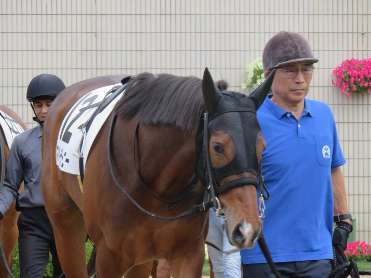 マハーラーニーの引退が決まりました。 新馬戦2着時には未勝利引退なんて考えてもみませんでした…。 よくなるのは古馬になってからと思っていたので本当に残念です。 川田君で勝てなかったのが痛かったですね。 お疲れ様でした。  もうこの厩舎には出資しない!!とは今年に関して言えないのが辛い😣