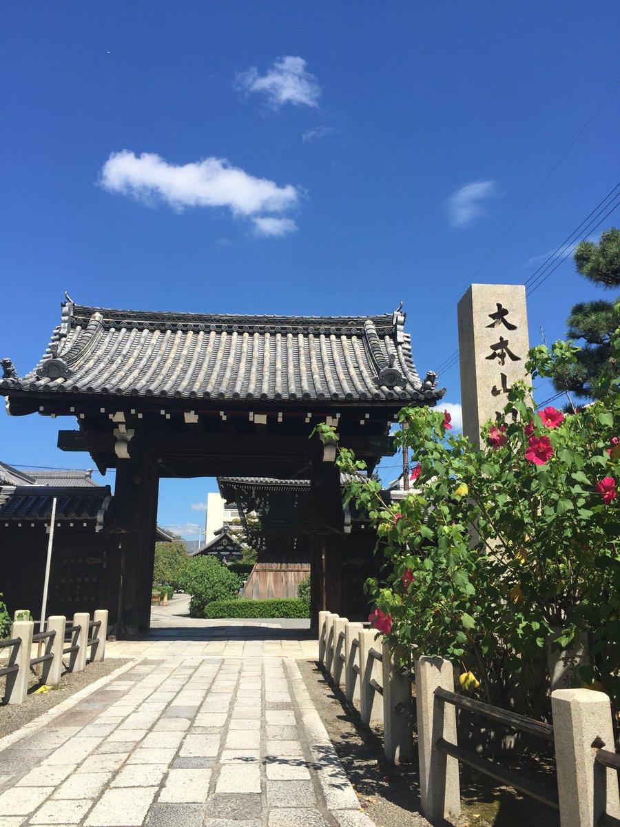 塚本邦雄のお墓のある妙蓮寺、京都駅からバスで30分芙蓉の花が咲いています。昨日は、慶子夫人の忌日でした。