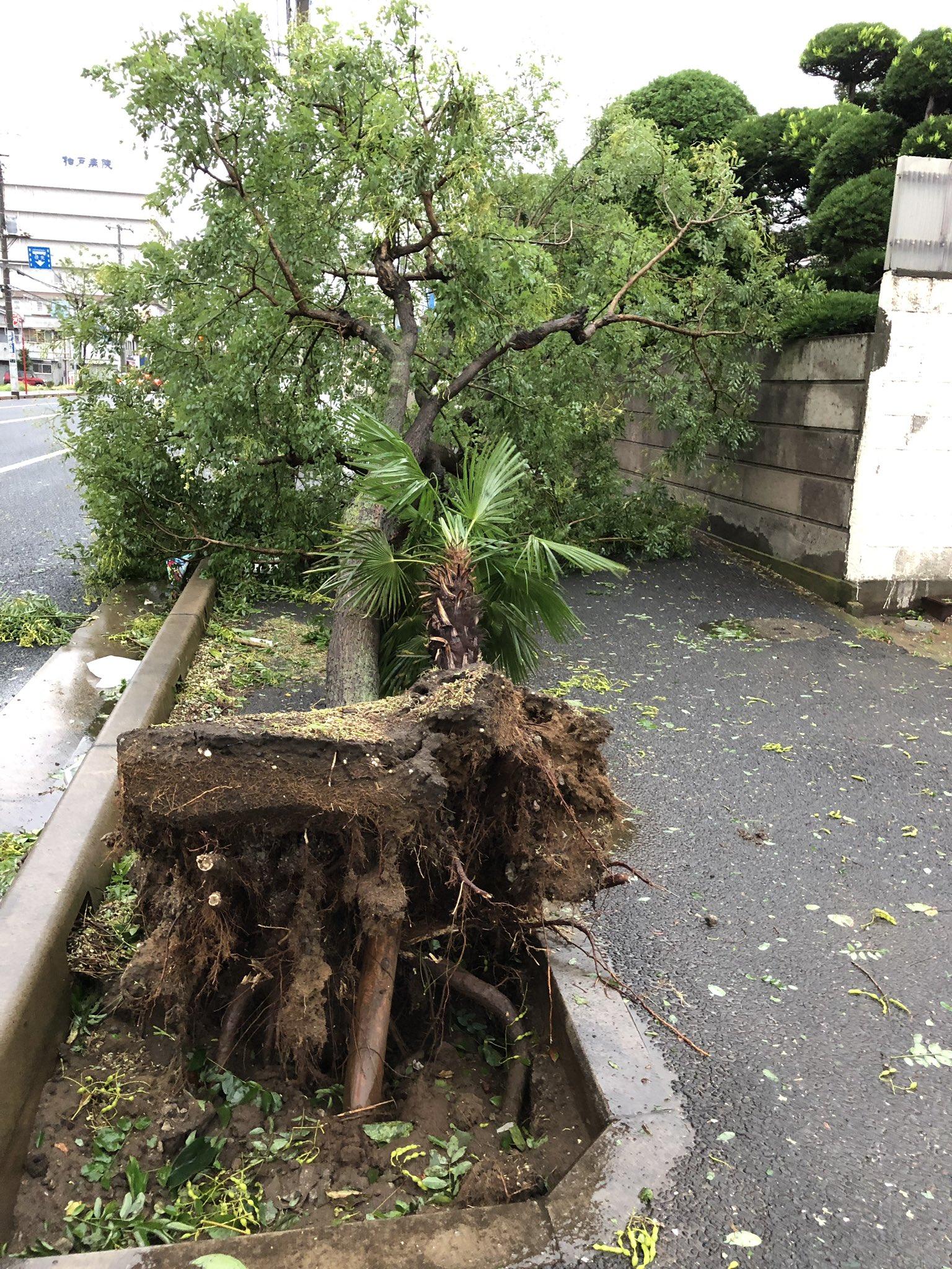 画像,倒木発見#千葉市 https://t.co/hBwV8luedt。