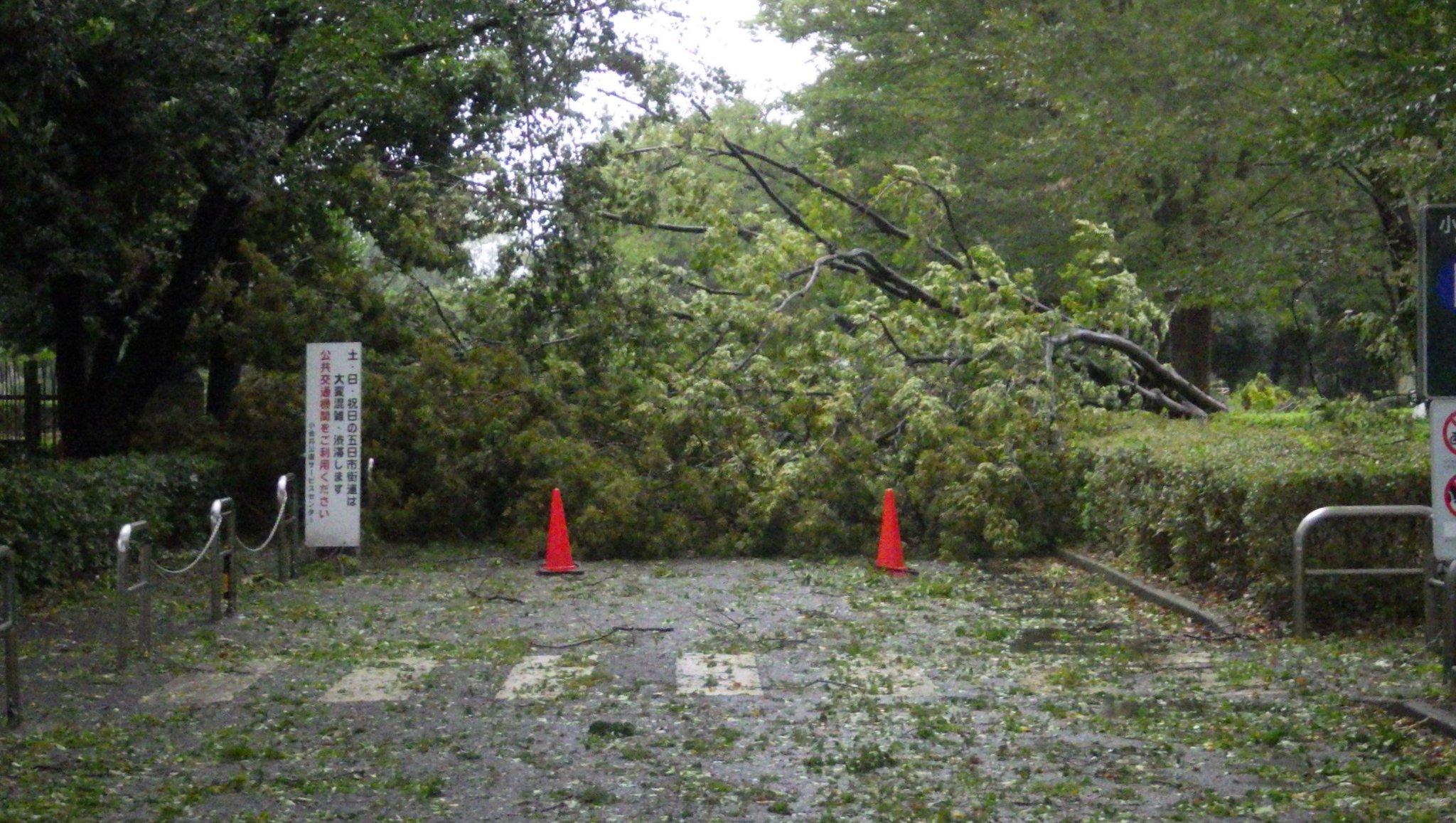 画像,【第二駐車場をご利用の皆様へ】台風15号の影響によるケヤキの倒木のため、第二駐車場の入口がふさがれ、ご利用いただけない状況です。ご不便をおかけいたしますが、なに…