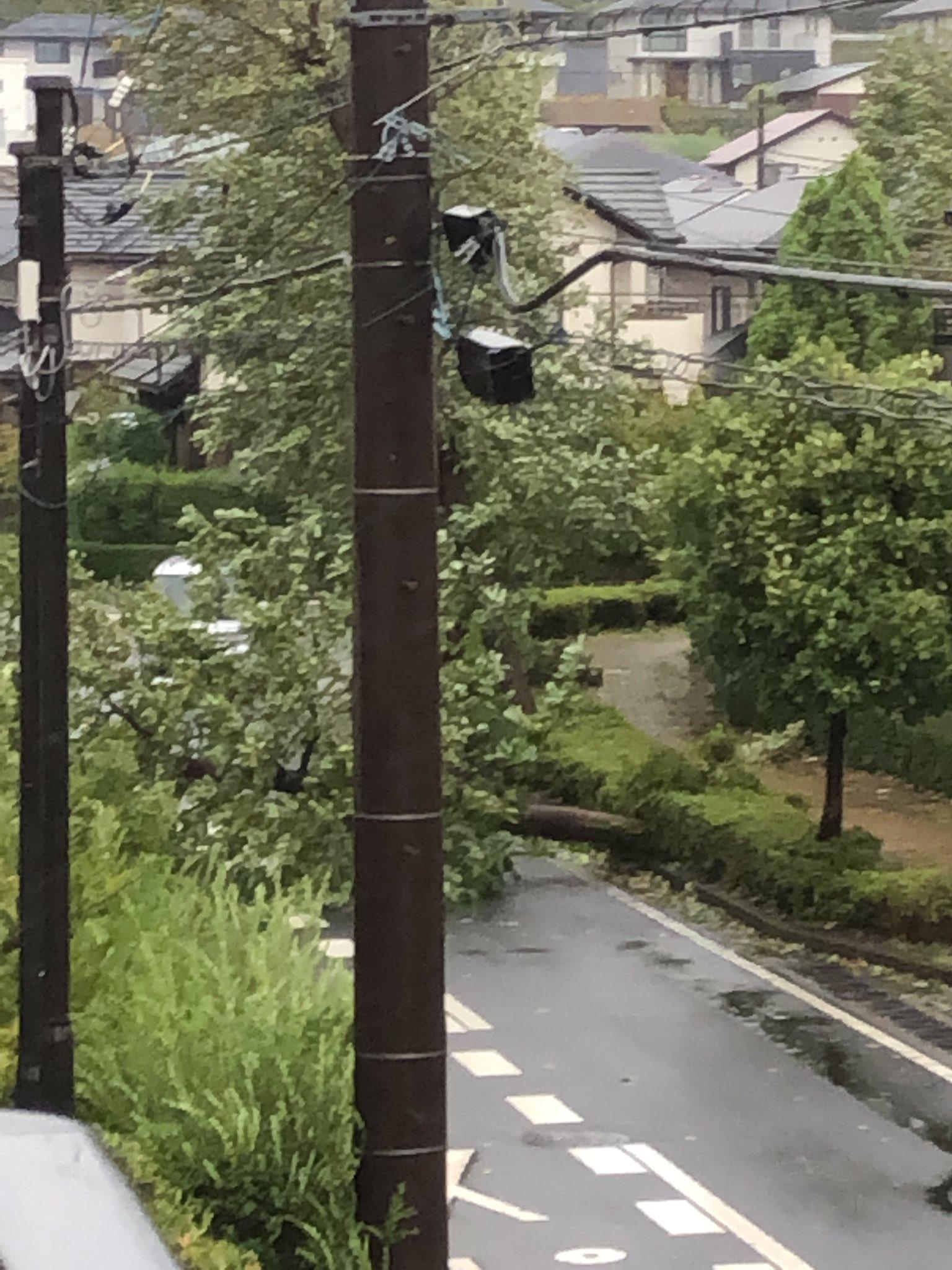 画像,佐倉市倒木で通行出来ません!#台風 https://t.co/yidLSDHxQs。