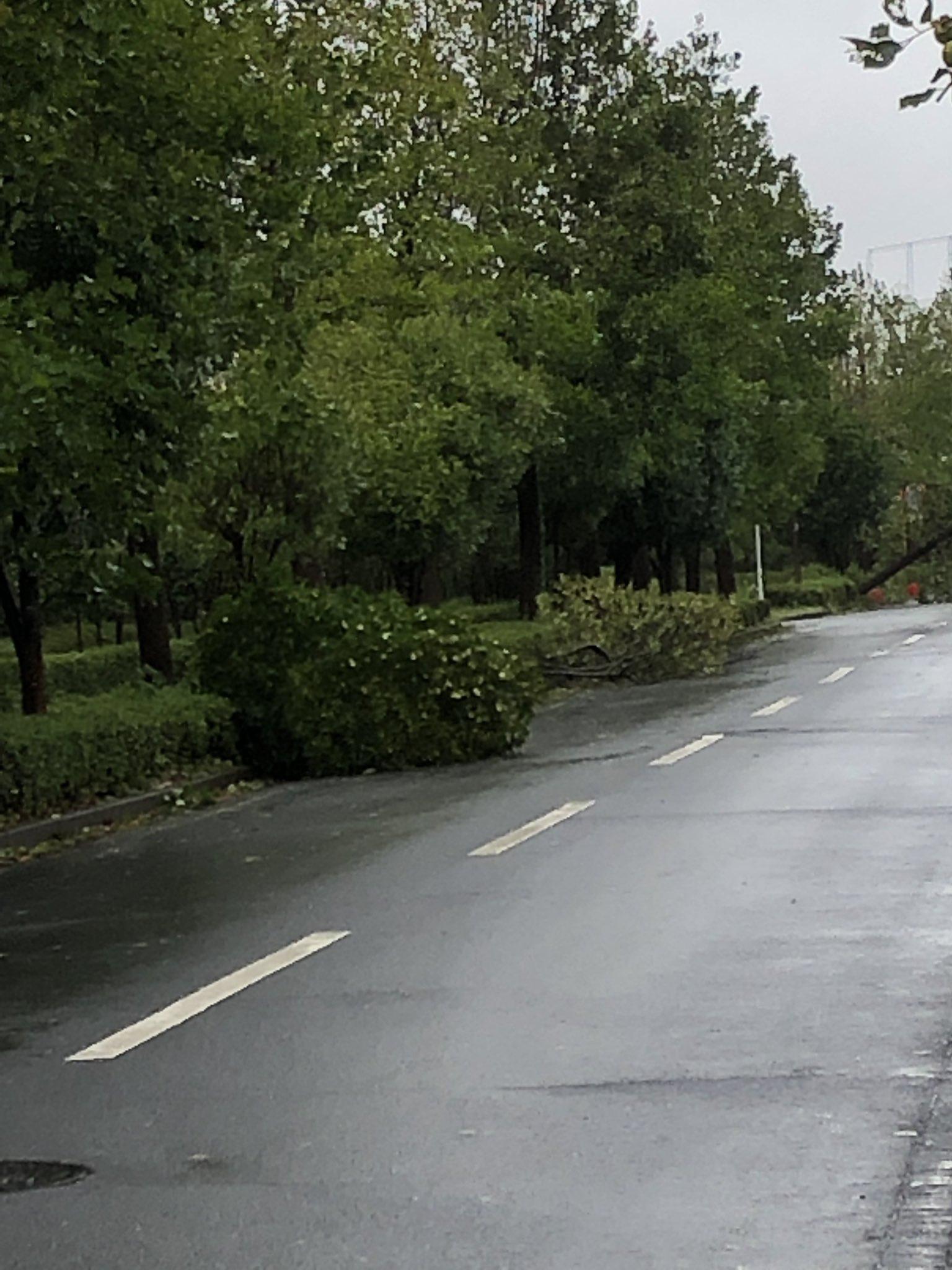 画像,バス通りに倒木多数佐倉市出掛けるなんて無理だからね#台風15 https://t.co/tYIGsrAcpA。