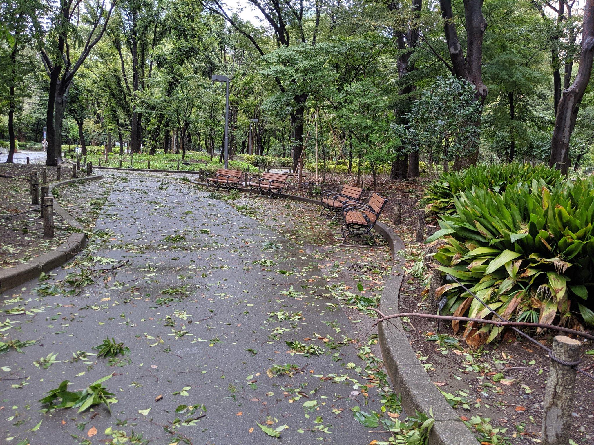 画像,台風後の新宿中央公園、倒木もなくひと安心。木の実がたくさん落ちてるので鳥達はエサに困らなそう https://t.co/V2BigN9506…