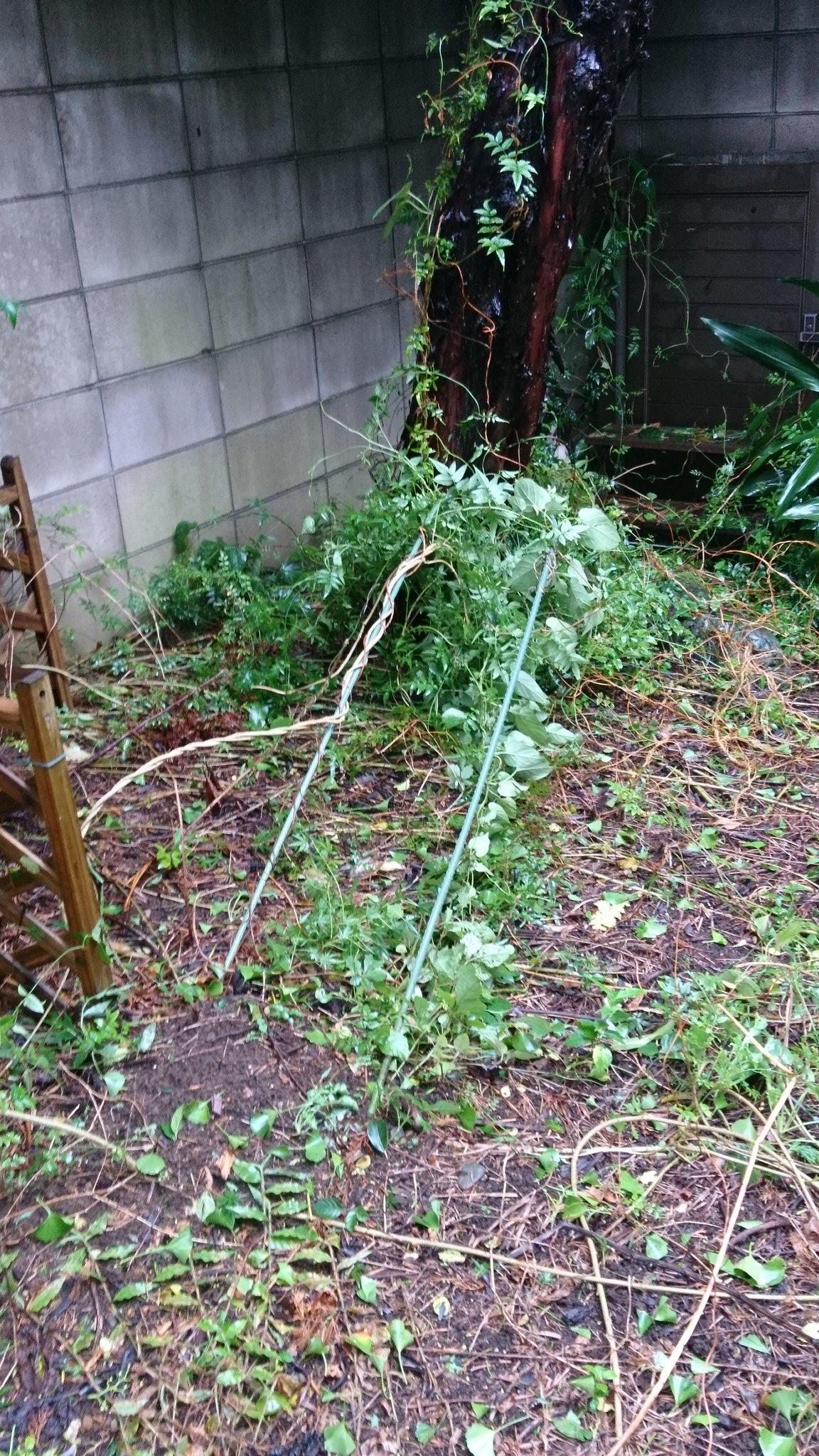 画像,台風のせいで庭木がメチャメチャだし、電車も動いてないから千葉県から出れないし💨家の回りも街路樹の残骸だらけ。独女なんだから片付けも一人だよ。面倒くさいことこの上…