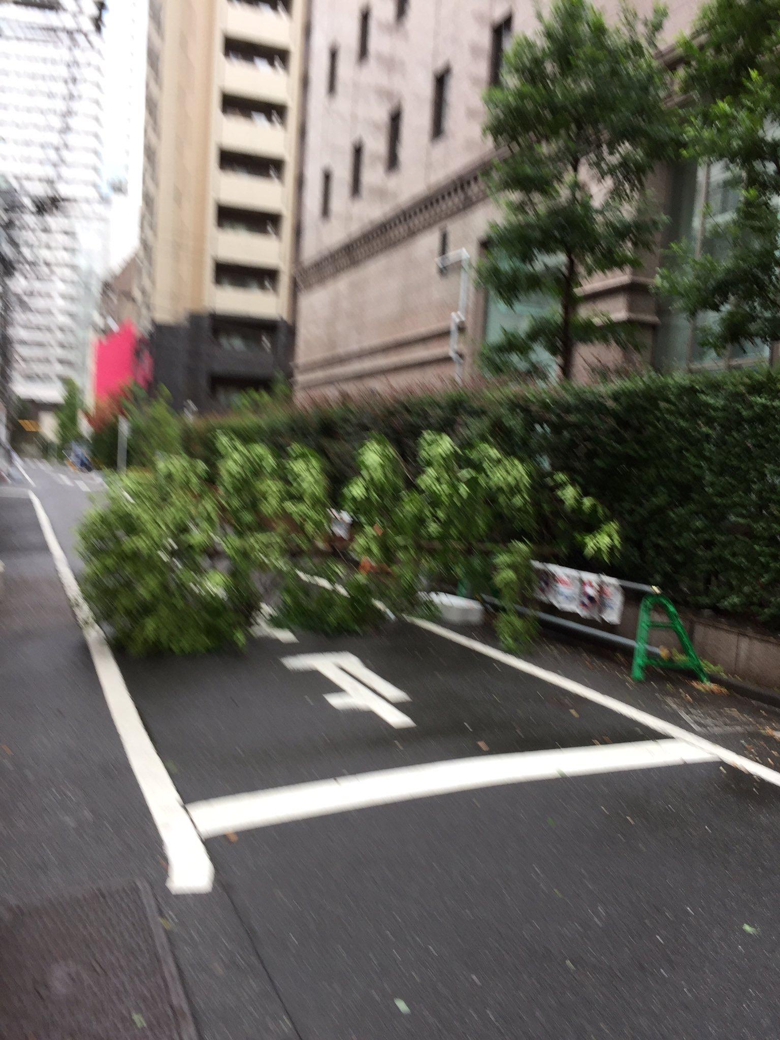 画像,ただ今活動中です。雨は止んでいます。浜松町でも倒木。道を塞いでいます。今朝は、定期健診で病院に来ました。台風の影響で鉄道が動かずこの時間の受診者は普段の3分の1…