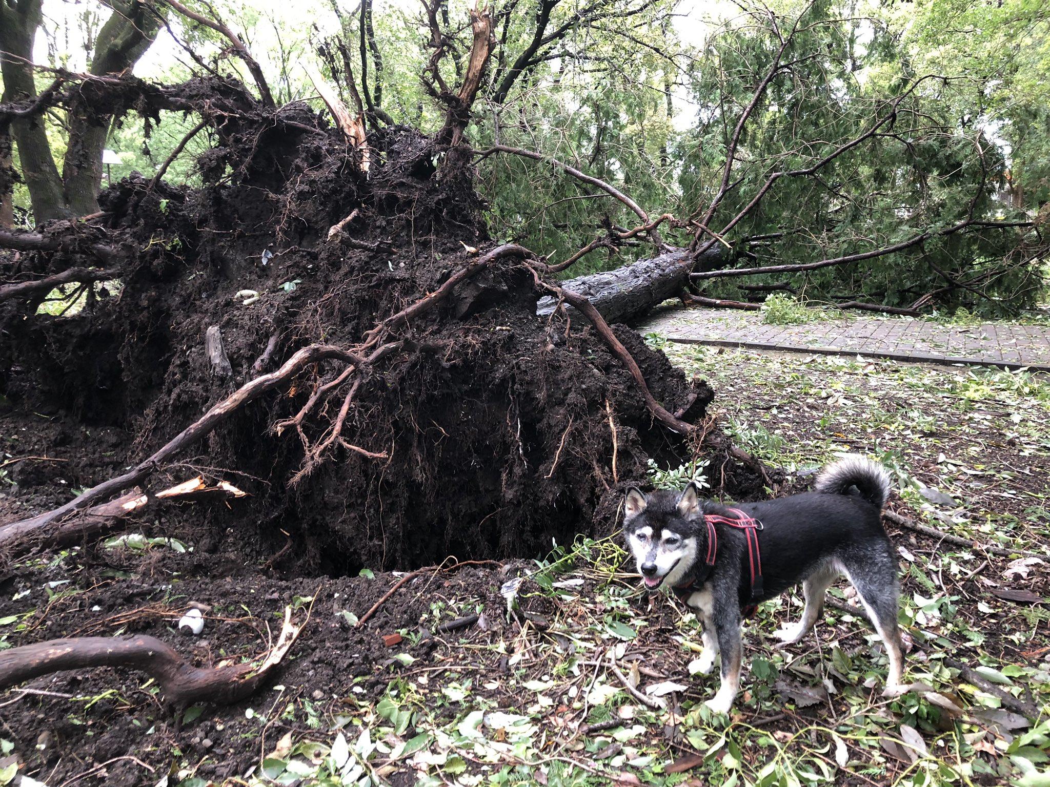 画像,台風🌀の影響。倒木、や太い枝が折れてる(>_<) https://t.co/iTQtExwRDW。