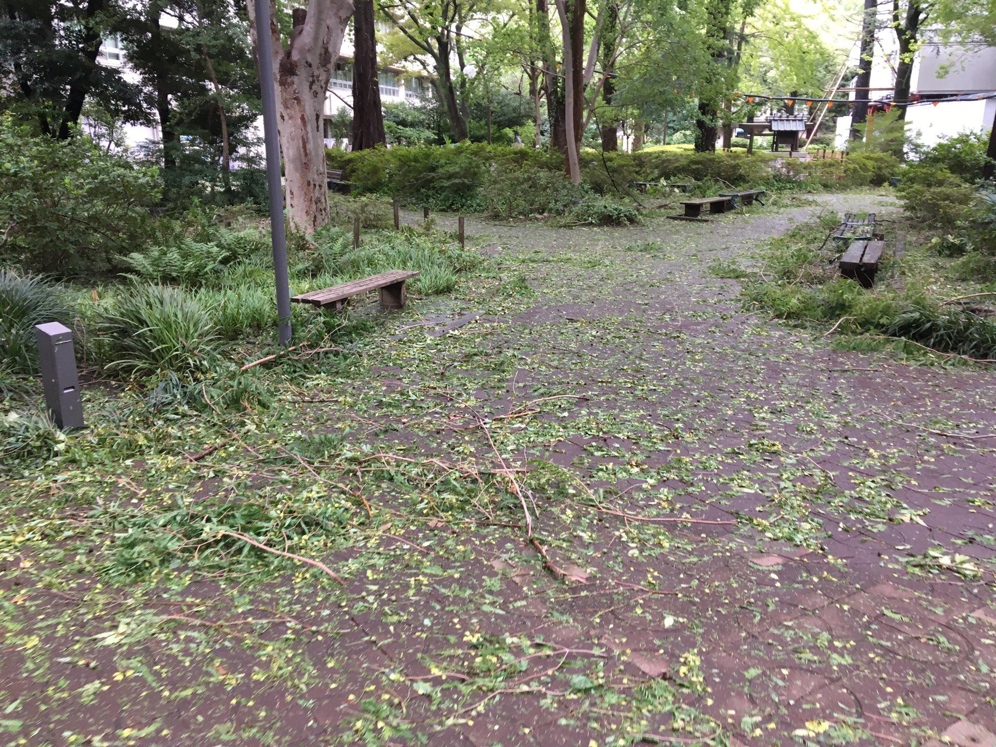 画像,台風ですね〜朝から学校も大荒れでした…学内で倒木は草もうすこし地盤固めてほしい。清掃員の人は大変だろうな〜💦小学生は「葉っぱの道だ〜」って騒ぎながら楽しそうに登…