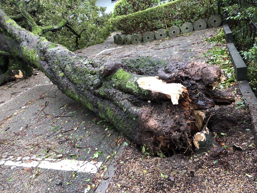 画像,家の裏で倒木❗️Σ('◉⌓◉') #災害 #台風 https://t.co/QSYWtMv3pX。