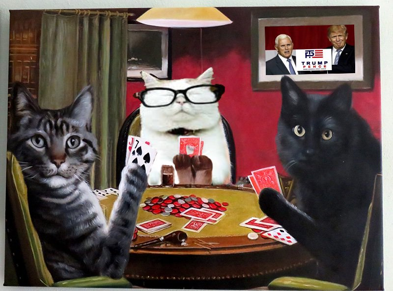 """Catturd ™ on Twitter: """"Catturd is so ready for the World Series of Poker,  this year.… """""""