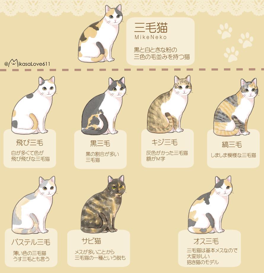 三毛猫飼いとして三毛の素晴らしさを広めたいと思い、種類をまとめました! (昔落書きした物の修正版です) 三毛猫大好きです!!!!!