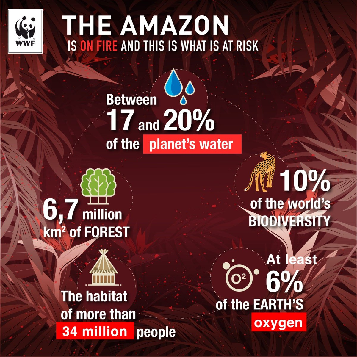 #Amazon needs our help more than ever. We have so much to lose with the Amazon burning & yet not enough action is being taken to stop its destruction. It's crucial that we urgently agree to a #NewDeal for Nature & People to better protect our . #ActForAmazonia <br>http://pic.twitter.com/rBQdHHVRQs