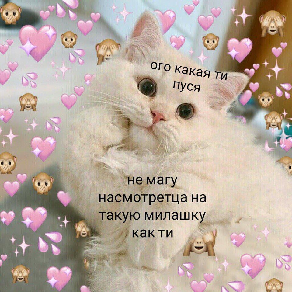 картинки с котиками милыми с надписью решили