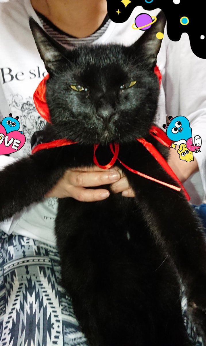 test ツイッターメディア - 休憩中  従姉妹殿が遊びに来た( #セリア #ハロウィーン グッズを土産に(笑)  そん中に #猫 用マント(左下写メ)があったので撮影を試みる  杏樹(黒猫MIX)は基本写メが嫌いなので従姉妹に抱っこしてもらい撮影  う~ん中々可愛く撮れへんけど…  杏樹マントが似合ってるし良し  猫最高 https://t.co/swwrfgTtwS