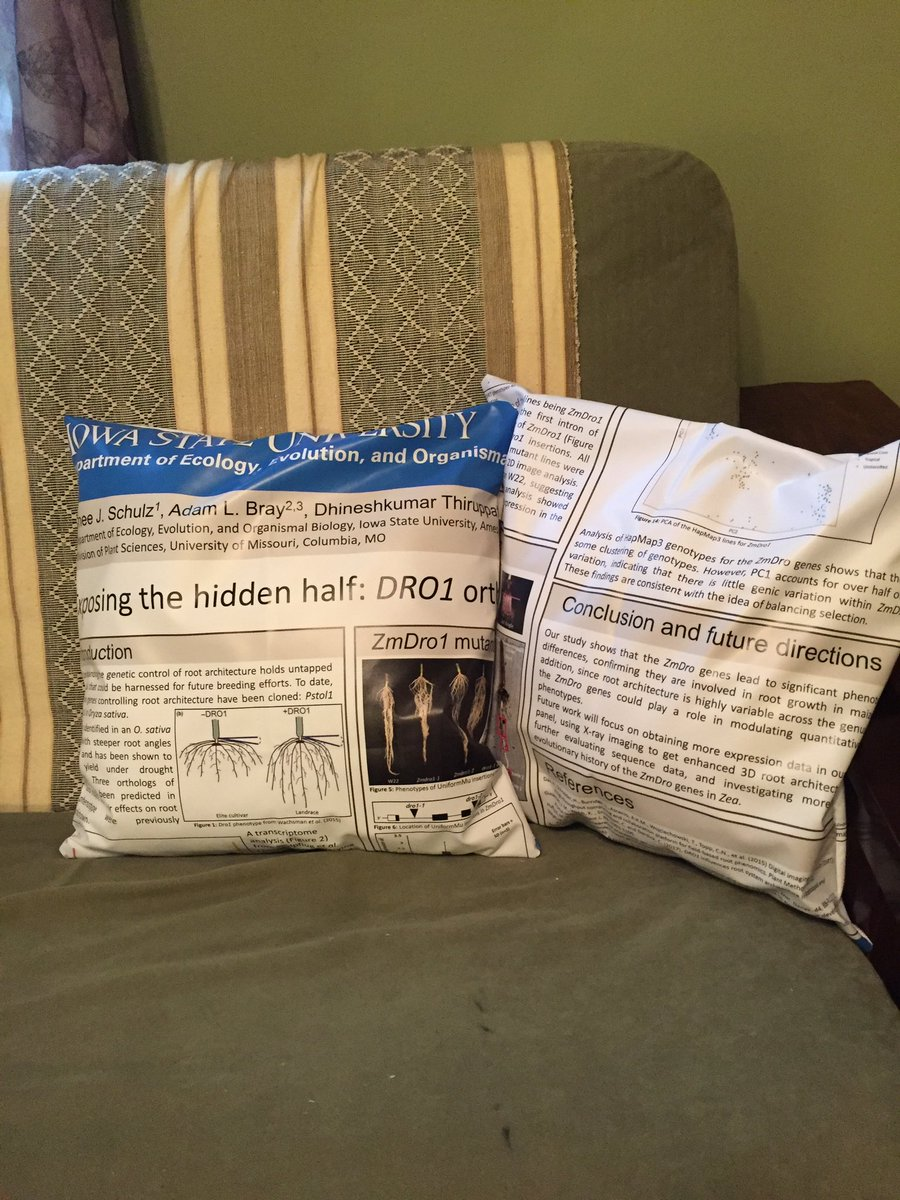 Our newest living room decor is rather a-maize-ing. Formerly my @ASPB Plant Biology cloth poster, now two throw pillows! #phdchat #AcademicTwitter <br>http://pic.twitter.com/QzqMyxnWh0