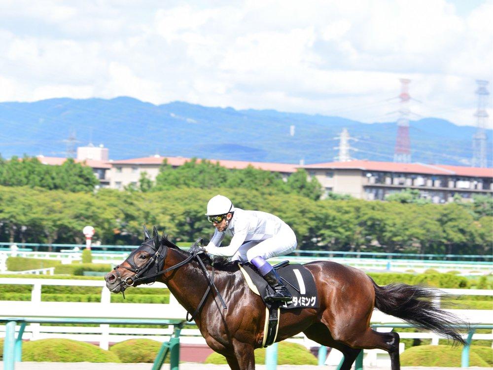 馬も人も暑くて大変です。 2日間の1番の感想。  #ゴータイミング #ヴァンドギャルド #新馬戦  #アルジャンナ  #阪神競馬場