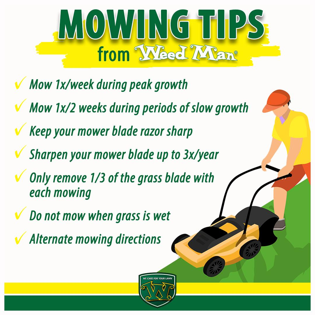 Lawn Care Chester On Twitter When Is The Best Time To Mow My Lawn Is A Question We Get Asked Often Check Out Our Latest Infographic For Everything You Need To Know