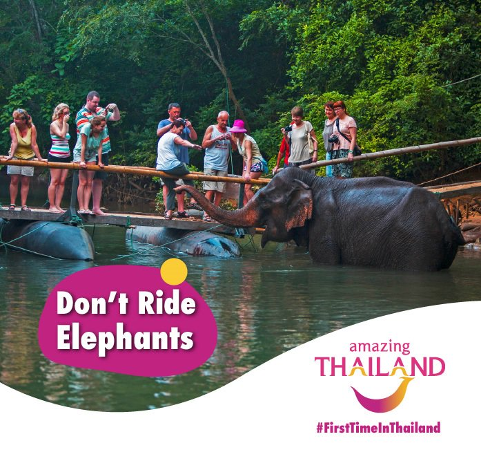 #FirstTimeinThailand There are elephant sanctuaries in the north of Thailand that rescue elephants from the tourist camps and giving them a chance to lead a natural life. Visit a reputable sanctuary instead. #amazingthailandsouthafrica #thaielephants #bekindtoelephantspic.twitter.com/uGruxBk3i7