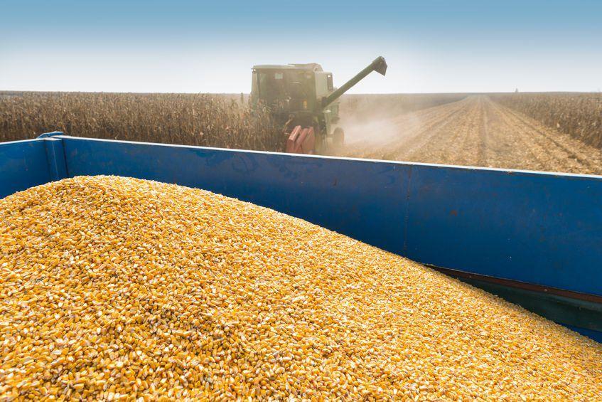 Maize estimates breach 11m tonnes, boosting supply outlook: https://bizcom.to/1/46e5 by Paul Makube via @Biz_Agriculture #SAagriculture #MaizeProduction pic.twitter.com/KX8wsQXlz4