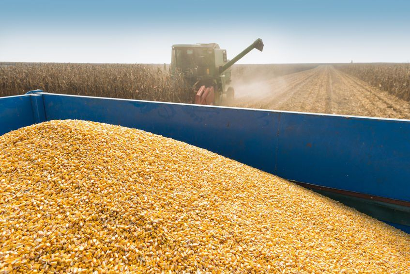 Maize estimates breach 11m tonnes, boosting supply outlook: https://bizcom.to/1/46e5 by Paul Makube via @Biz_Agriculture #SAagriculture #MaizeProduction pic.twitter.com/RGTLnzKZSR