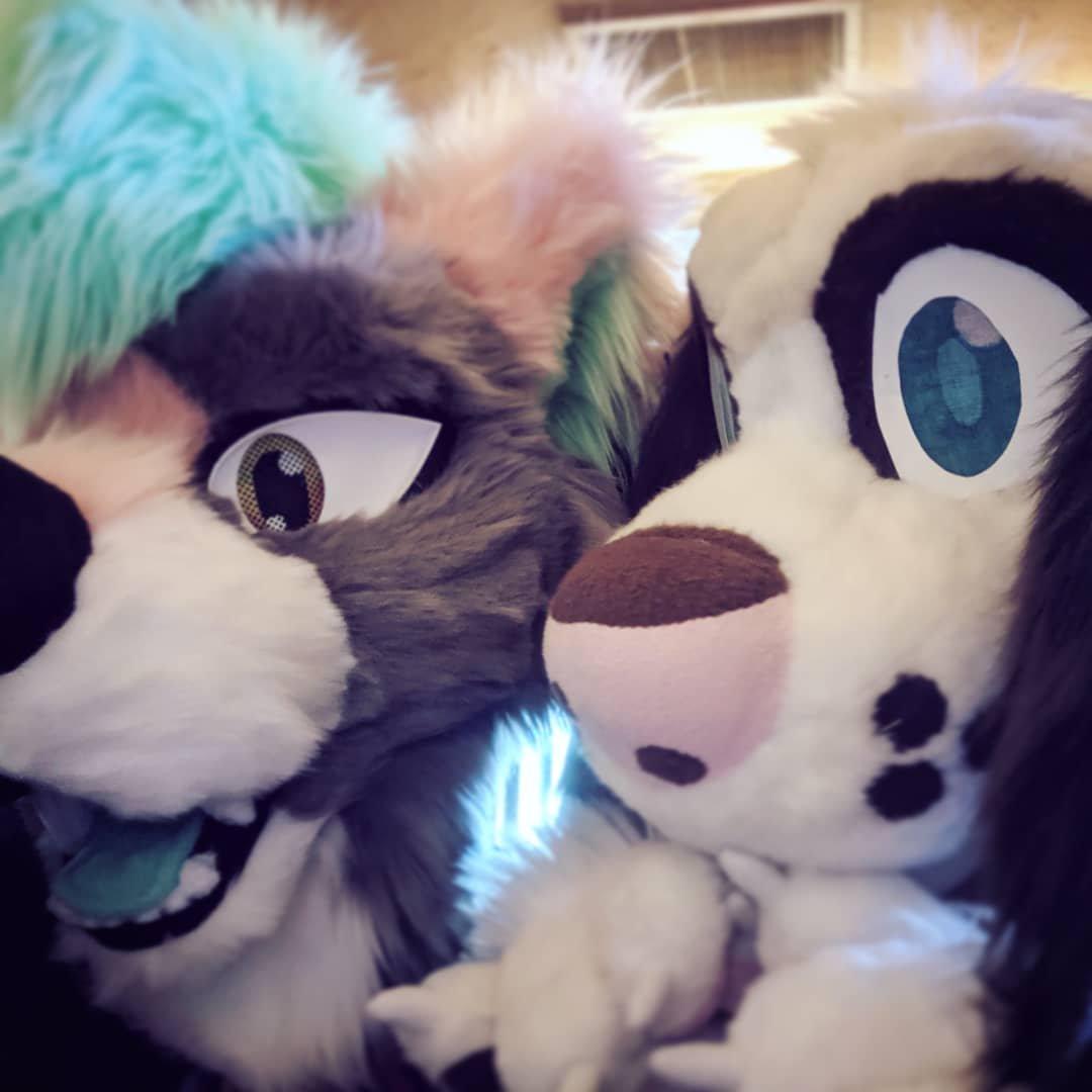 Fuzzy friends  #spokanthro   #spokanthro2019 #furryfandom #fursuit #fursuiter #fursuiting<br>http://pic.twitter.com/p2g6iWHzIy