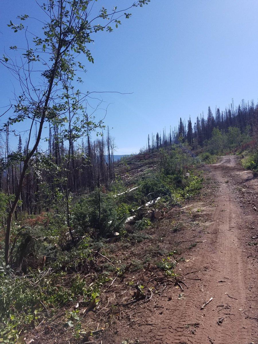 White River National Forest (@WhiteRiverNews)   Twitter