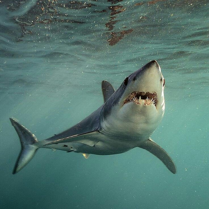 сам тарантино акулы всех видов картинки этого смартфона