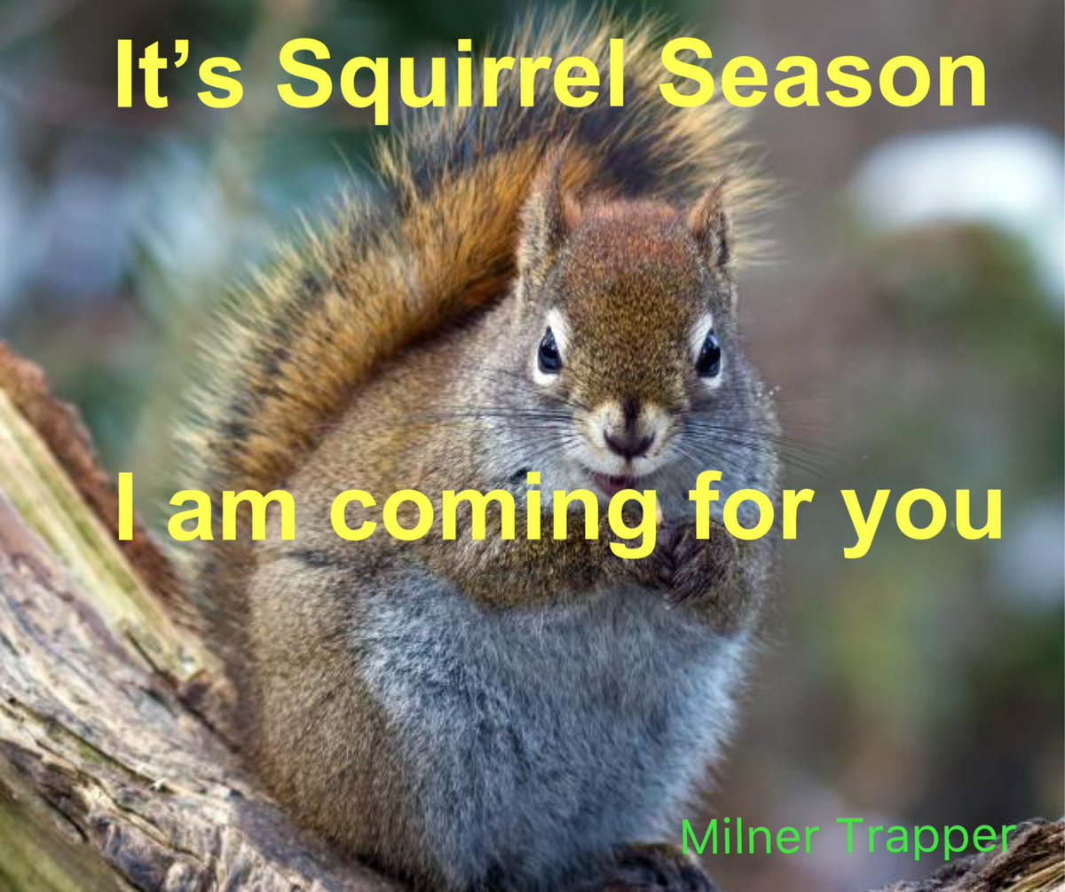Time to put some squirrels in the pot. #squirrel #squirrelhunting #squirreltrapping #squirrelstew