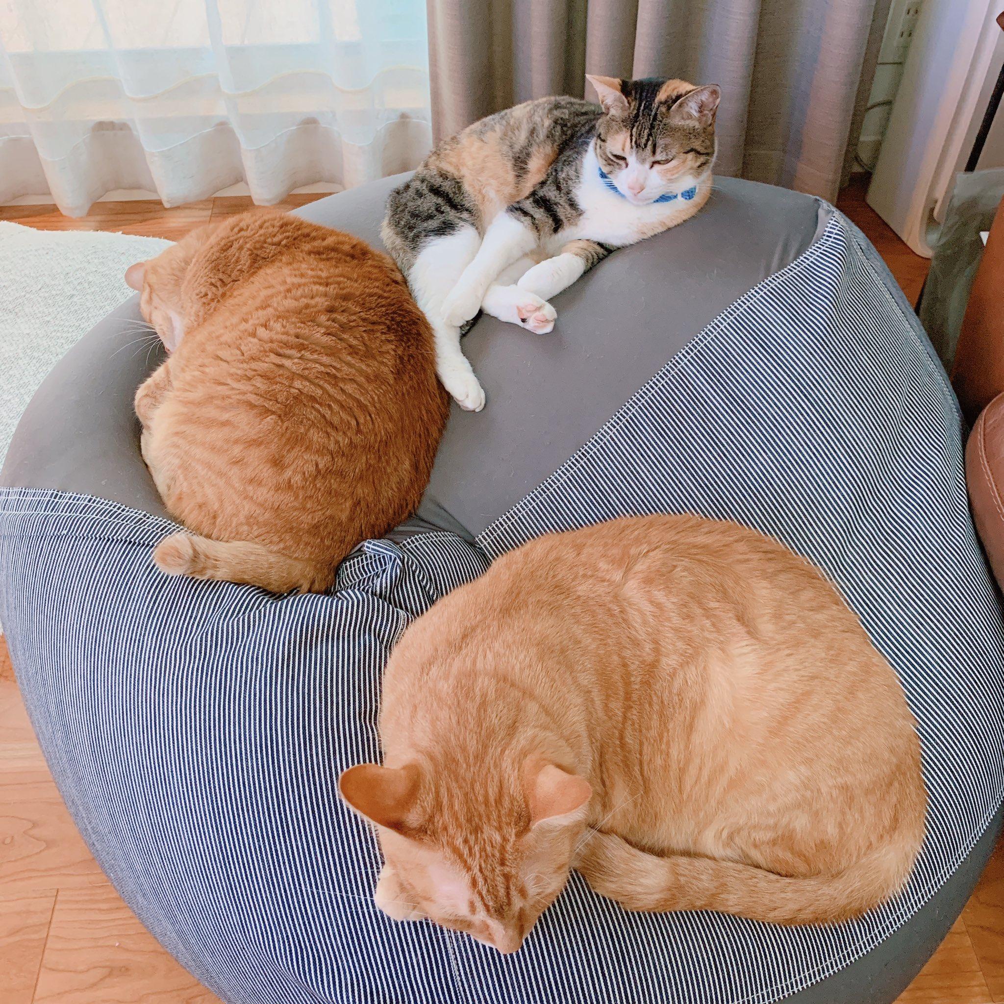 無印の人をダメにするソファ買って半年経つんだけどなんかとにかくいつも混み合ってて座らせてもらえない