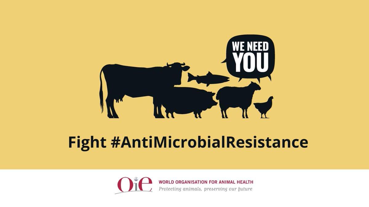 OIE Animal Health (@OIEAnimalHealth) | Twitter