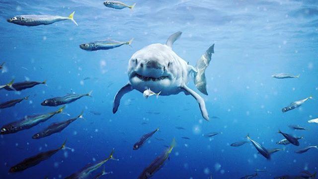 sharkconservation hashtag on Twitter
