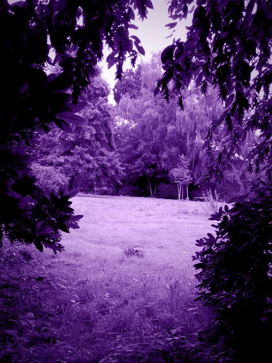 #Violet View from the wood in the afternoon. #creepy #eerie #sinister #darkness #evil #macabre #horror #scary #fear #frightnight #sorrow #melancholie #GothicLove #NaturePhotography @i_GhostTwd @ladybloodwound @EllixLife @AntoniaSchmitt4 @Killer_edit @kinkumakurokuma @bro877pic.twitter.com/foQmG5XXGB