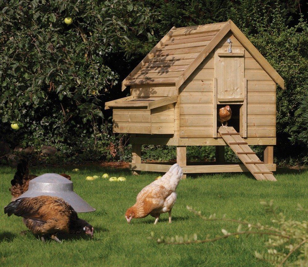 домик курица для зима и лето фото герберы