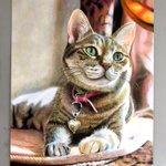 本物よりも本物っぽい?色鉛筆で50時間かけた描かれた猫のイラストが凄すぎる!