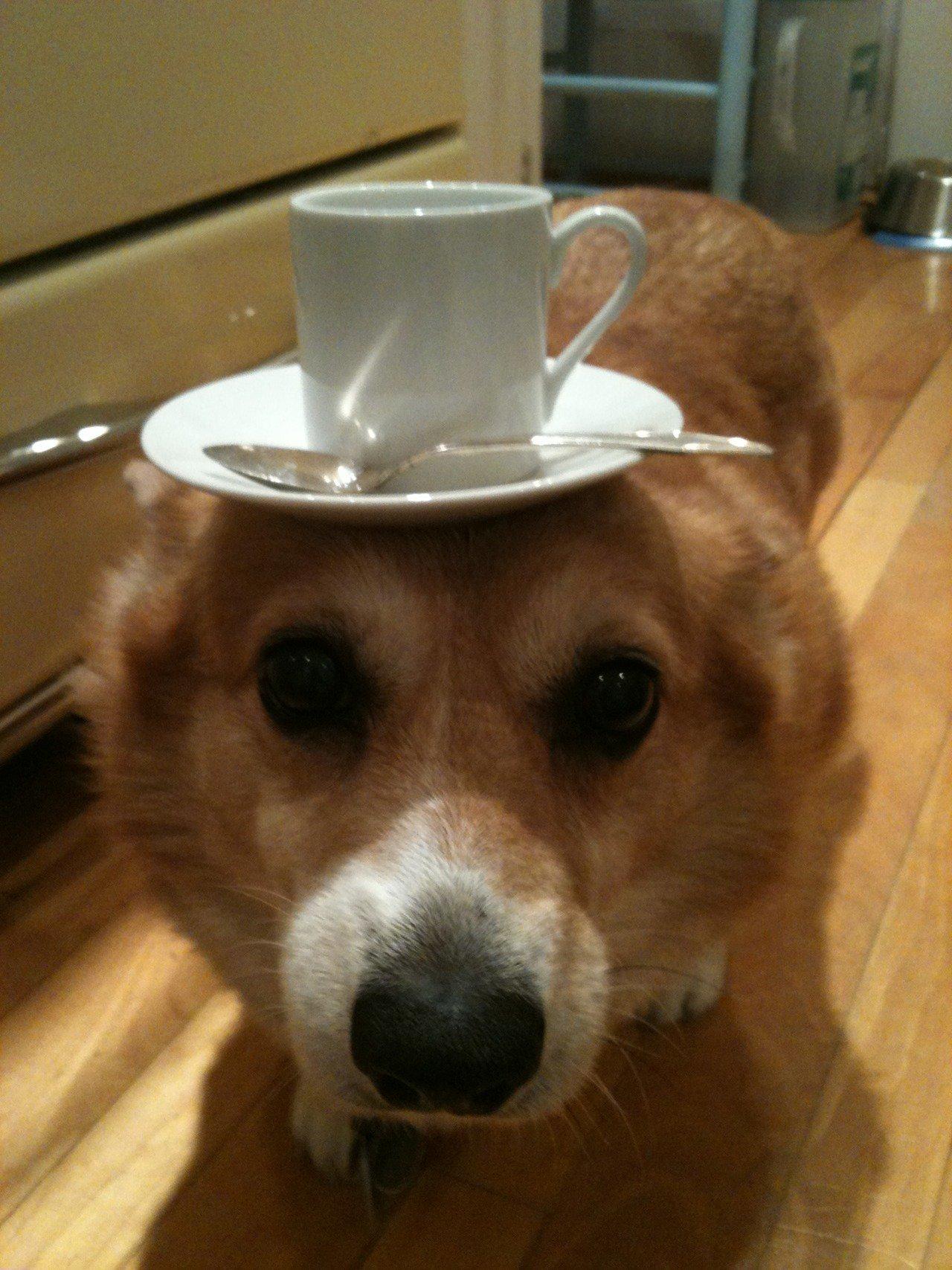 Смешные фото животных с кофе