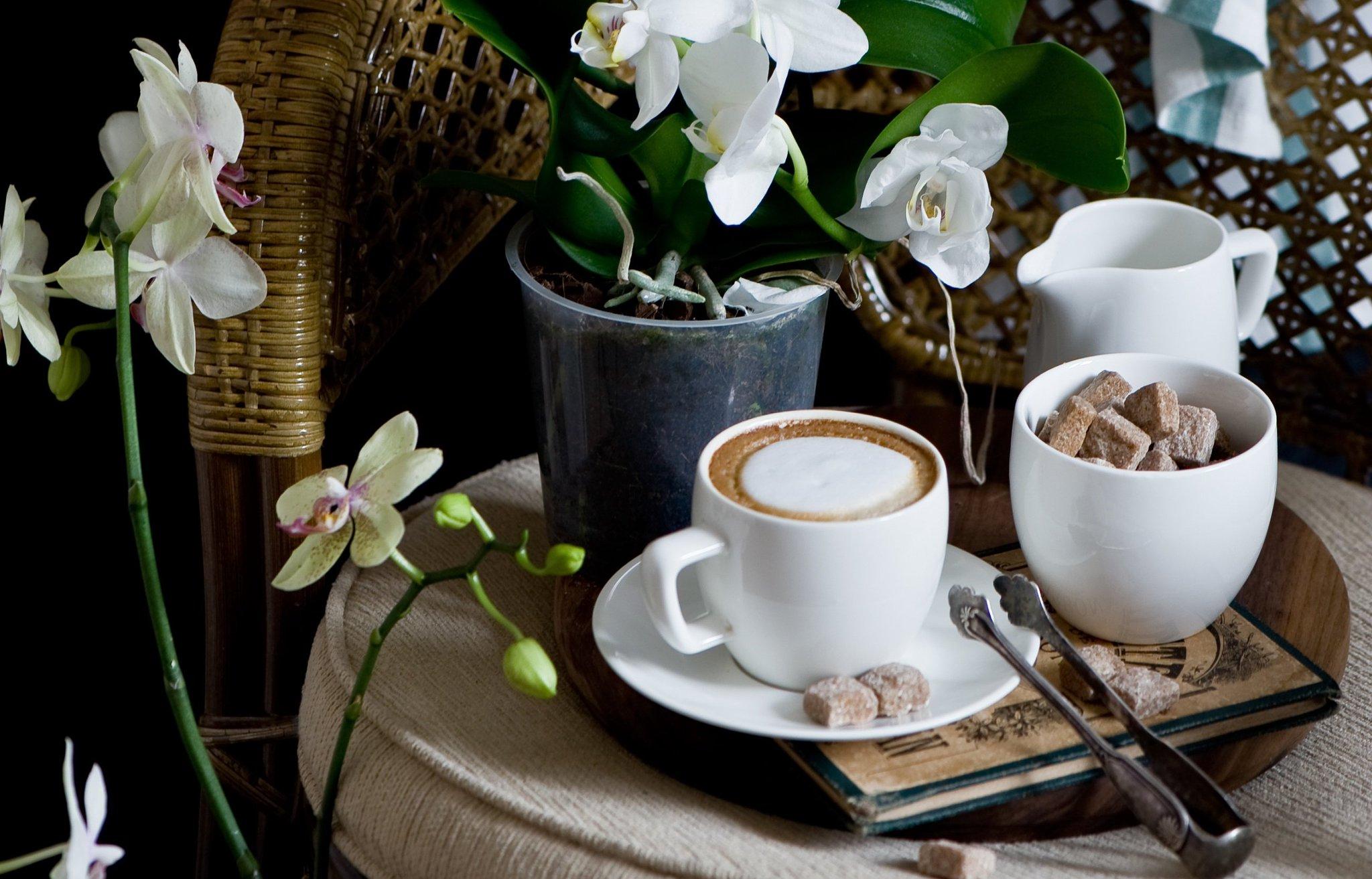 Доброе утро картинки с орхидеями, добрый вечер подруженьки