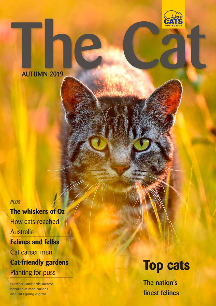 The Cat Magazine Thecatmaguk Twitter