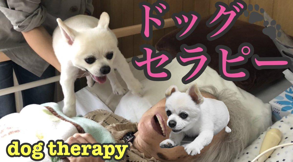 ドッグセラピーに挑戦⁈ 笑顔が笑顔を呼ぶ幸せの連鎖!  #ドッグセラピー #セラピードッグ #癒し犬 https://youtu.be/bznQdI-nKNMpic.twitter.com/TACZ6lMnUs