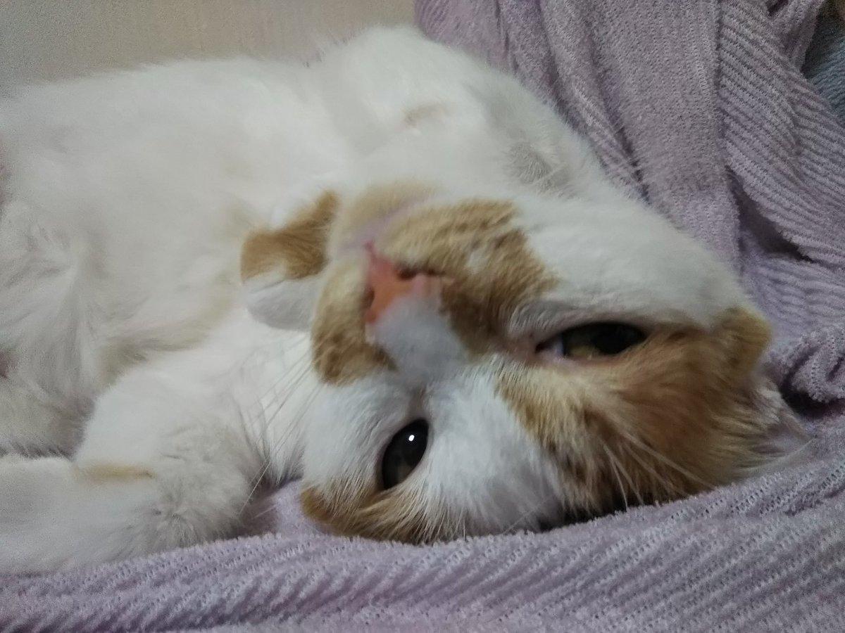 やる気ゼロ_(:3」∠)_でも猫毛綿埃は目に入る…掃除機かけだしたら止まらないし?家事に休みは無いのか…??一昨日も猫MISSION以外何もしない日にしてみたはずが洗濯しちゃったし?掃除機煩い1階から2階へ避難しベッドでゴロゴロ…zzZ中のんタン#のんタン