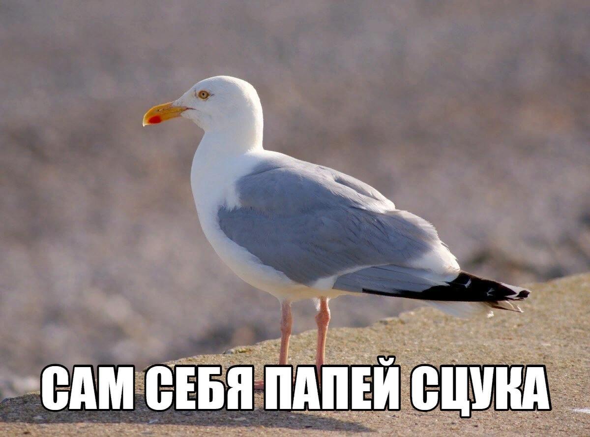 картинки иногда вот так сядешь чайку попить и понимаешь что чувствуешь, интересно
