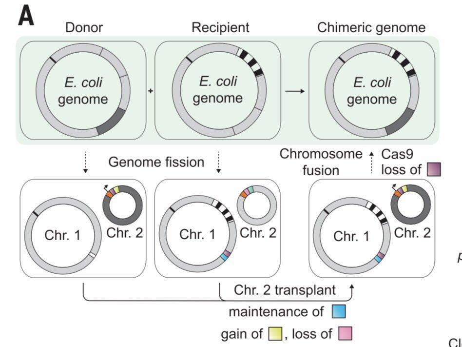 CRISPR의 변신