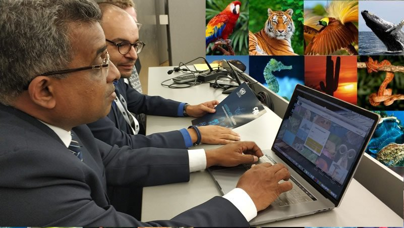 "To help combat illegal trade in wildlife, UNCTAD unveiled at @CITES #CITESCoP18 a cloud-based system dubbed ""eCITES BaseSolution"", to enable countries to better control the legal trade of endangered species. bit.ly/2NGOESc"