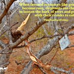 Image for the Tweet beginning: Happy #EleFunFactFriday!  When favored resources like