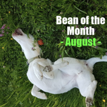 Image for the Tweet beginning: August's #BeanoftheMonth is here to