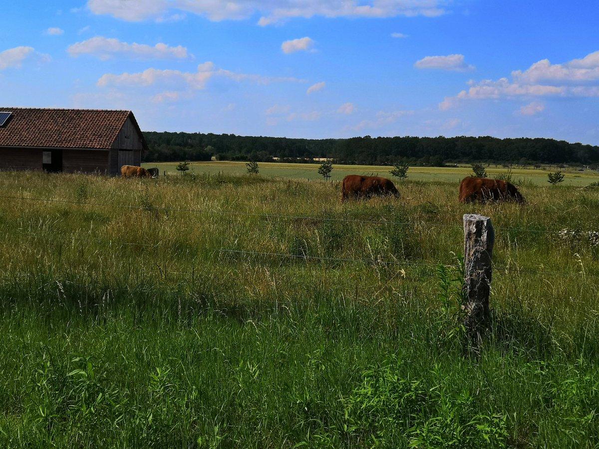 @heinmax50 Und noch die Rinderwiesen hinter den Häusern in unserem Dorf! Alles Liebe wünschen wir! ♥ https://t.co/FZCmTPxJIG