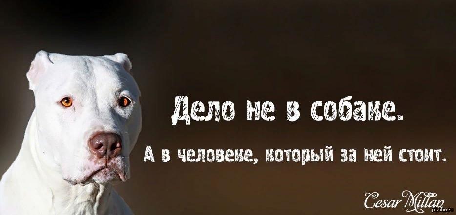 Фразы про собак на картинках