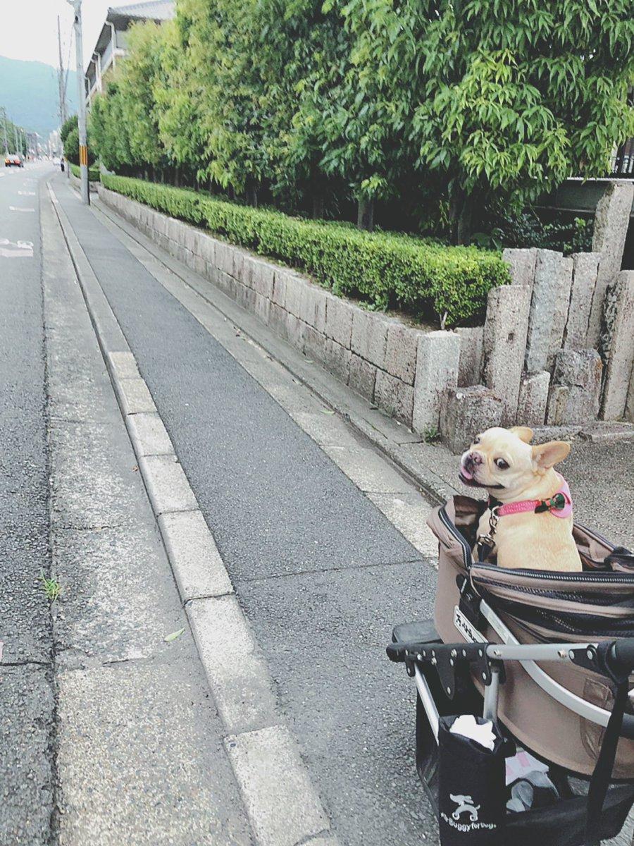 今日はこれから 吉田山の近くで「夜市」があるので ハンちゃんも一緒にお出かけしま〜す  #犬とお出かけ #京都 #犬用カート #エアバギー #吉田東通り夜市 #フレンチブルドッグ #フレブル #犬との暮らしpic.twitter.com/Ah7GNSjGCT