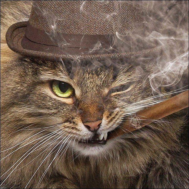 Днем, открытки котов с сигаретой
