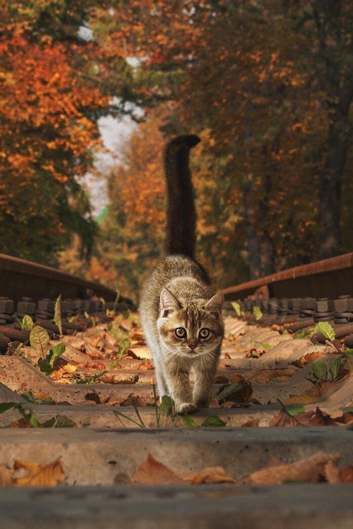 Эскиз открытки, осень пришла картинки прикольные