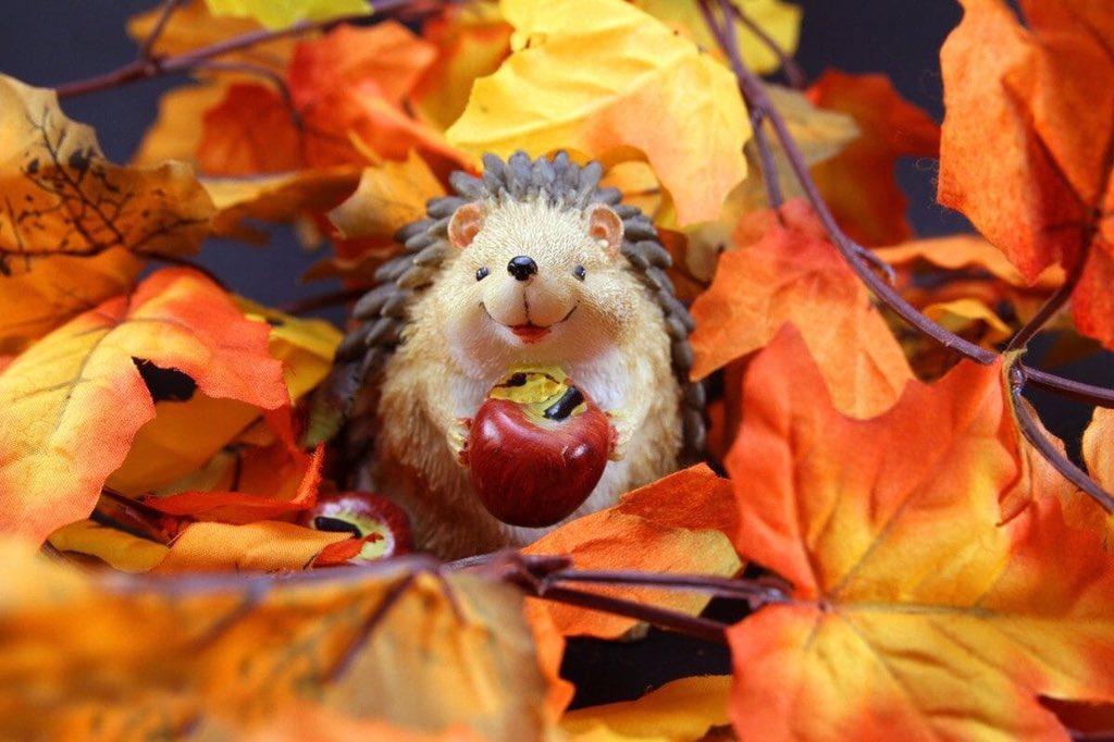 Днем, открытки с осенью прикольные смешные