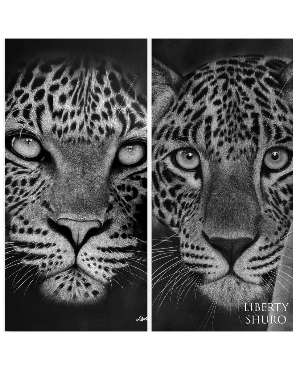 leopard hashtag on Twitter